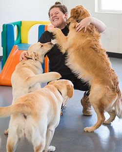 doggie daycare in North Reading