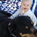 Kids n' canines family dog and child safety